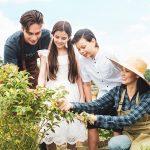 Eco-farming lifestyle at The Grove at Plantation Hills
